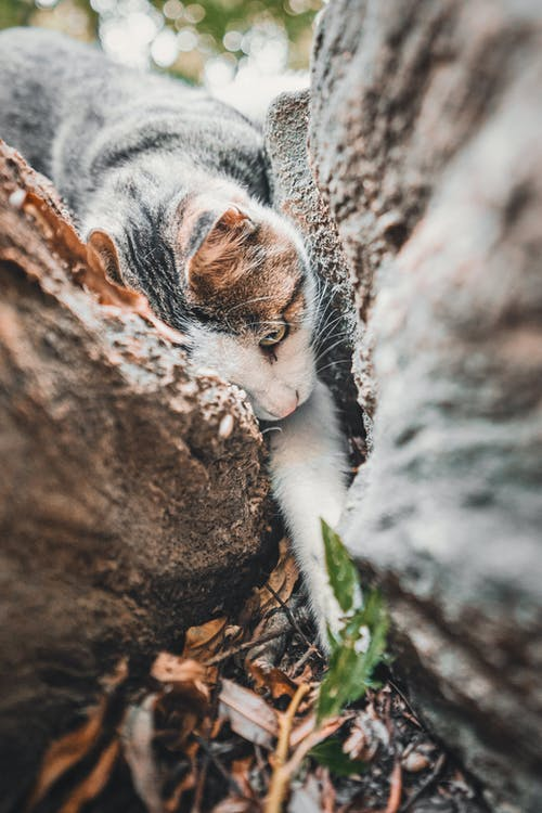 White and Brown Cat on Brown Tree Trunk
