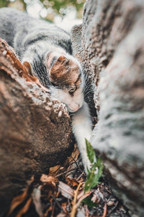 Photos gratuites de animal, arbre, bois