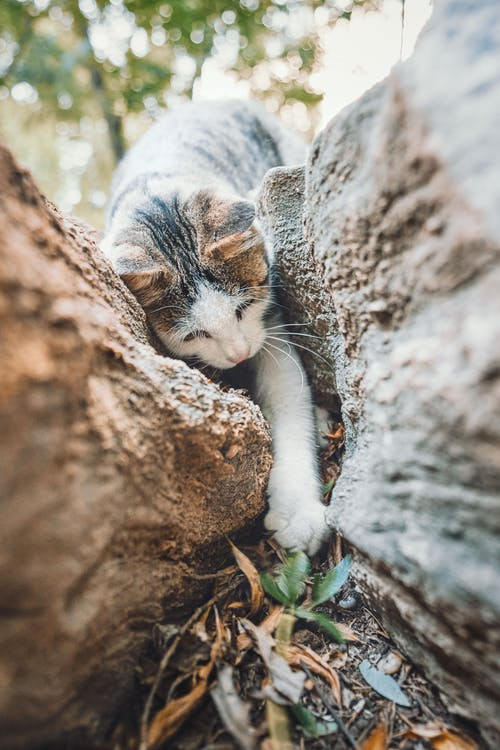 White and Grey Cat on Brown Rock