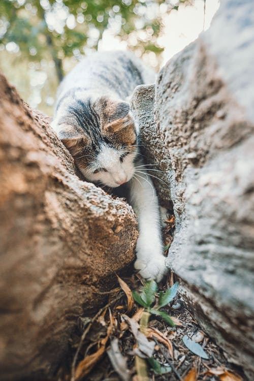 White and Grey Cat Climbing A Tree