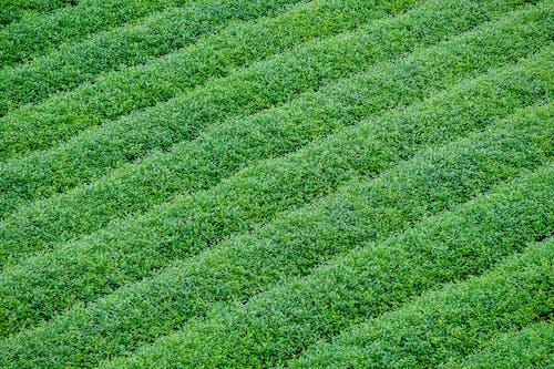 Gratis stockfoto met aarde, blad, bloemen, boerderij