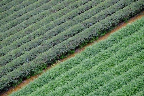 Gratis stockfoto met akkerland, blad, bloemen, boerderij