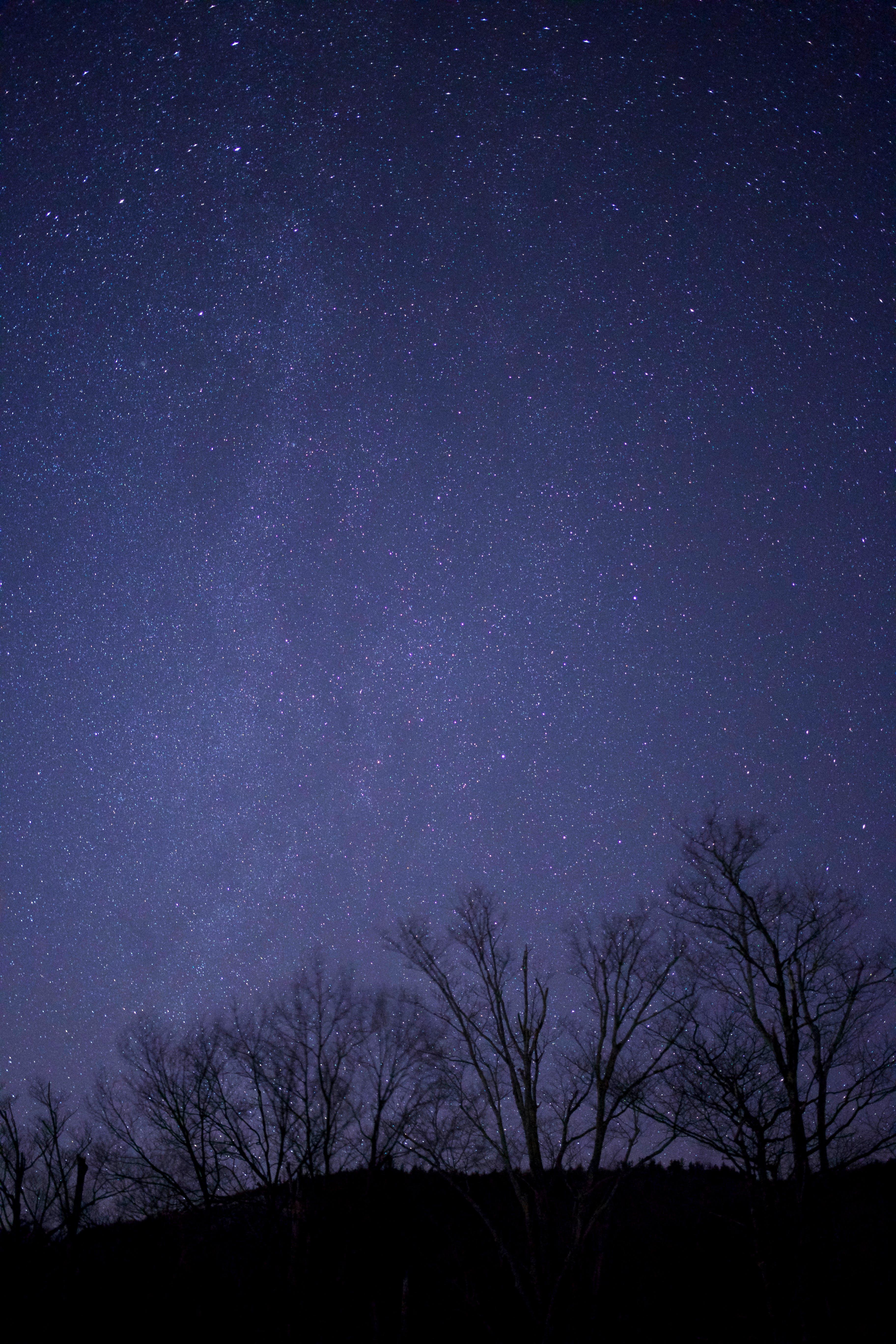 Gratis stockfoto met beroemdheden, bomen, donker, hemel