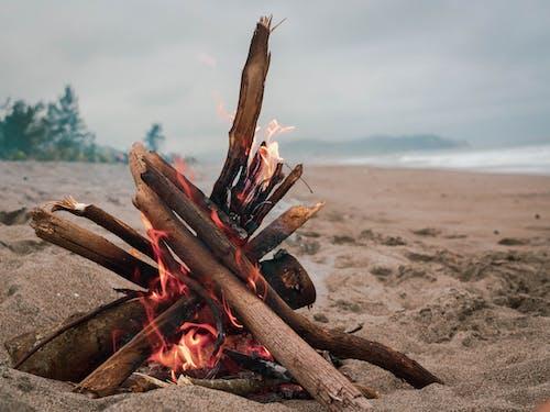 Brown Wood Log on Brown Sand