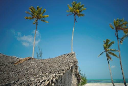 Fotos de stock gratuitas de cabaña de nypa, cielo azul, Cocoteros