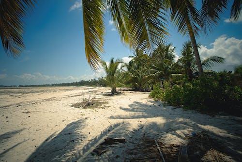Fotos de stock gratuitas de arena, cielo azul, Cocoteros