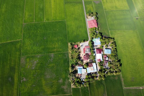 Green land parcel with small cottages amidst rice fields
