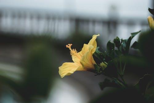 Foto profissional grátis de amarelo, ao ar livre, aumento, brilhante
