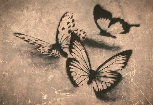 Photos gratuites de #papillon, abstrait, art, art abstrait