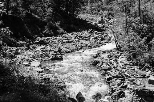 Základová fotografie zdarma na téma černý a bílý, divoký, příroda, řeka