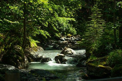 Kostenloses Stock Foto zu berge, fluss, natur