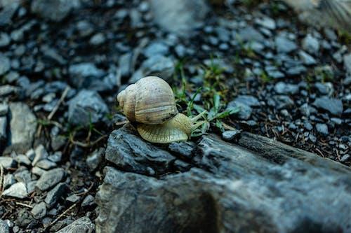 Základová fotografie zdarma na téma divoký, les, příroda, šnek
