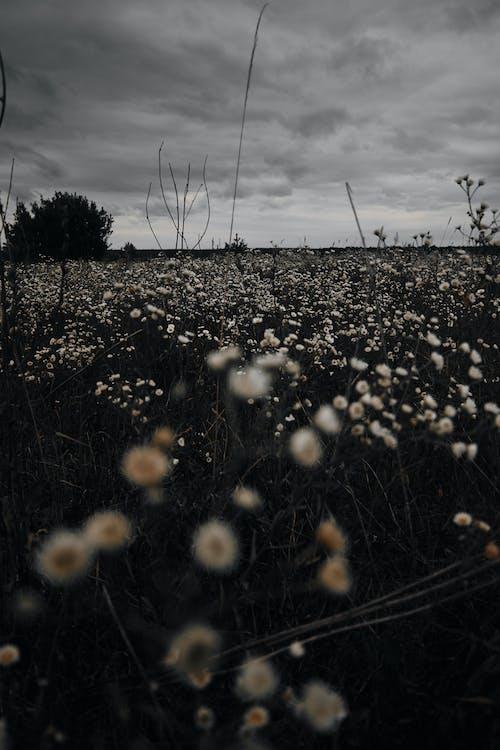 Foto d'estoc gratuïta de a l'aire lliure, camp, camp de flors