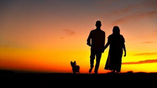Imagine de stoc gratuită din apus, câine, cățel