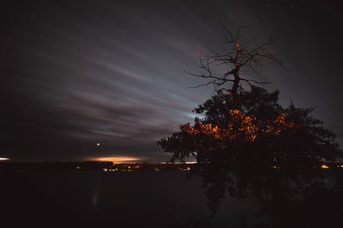 Free stock photo of creepy, creepy tree, dark, halloween