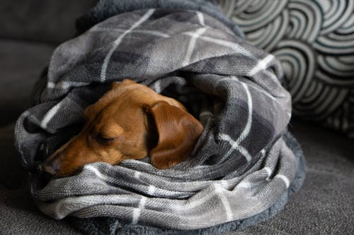 Brown Short Coated Dog on Gray and White Textile
