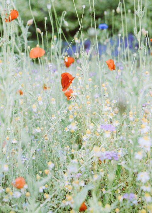 Orange Flowers on Green Grass Field