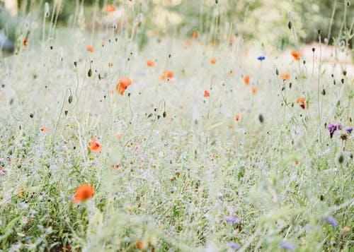 Immagine gratuita di campo, colore, erba