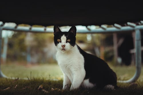 White and Black Cat on Brown Grass