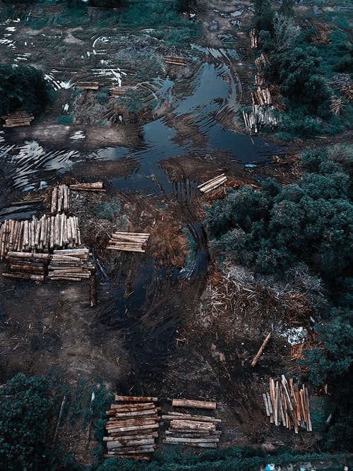 Drone view of piles of cut tree logs placed on dirty wet terrain near green forest in daytime