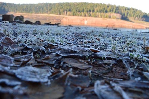 凍った湖, 凍る, 大きな葉, 怠け者の無料の写真素材