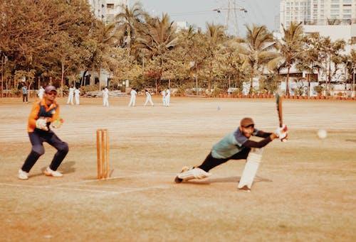 Free stock photo of cricket