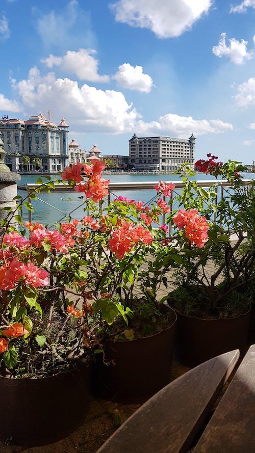 #花, 建築物, 海で, 美しい風景の無料の写真素材