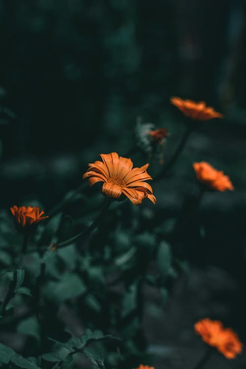 Free stock photo of blur, dark green, flora