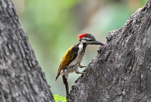 Yellow Black and White Bird on Tree Trunk