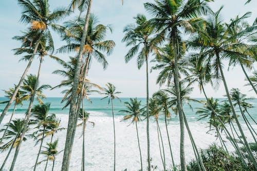 Foto profissional grátis de água, areia, árvore