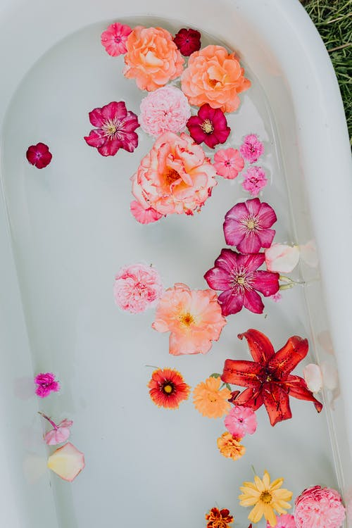 Overhead Short of Pink and Red Flowers in a Bathtub
