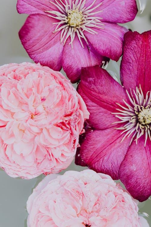 Pink Flower With Yellow Stigma