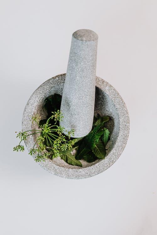 Gratis lagerfoto af blad, flora, friskhed