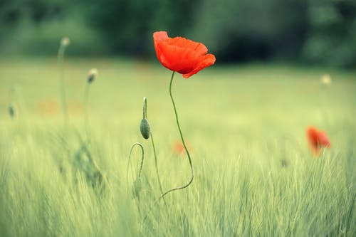 Foto stok gratis berbayang, bidang, bunga, daun