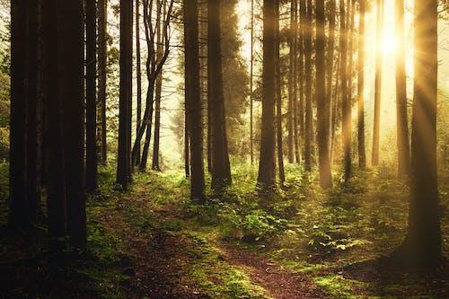 Foto stok gratis backlit, bayangan, bimbingan, cahaya