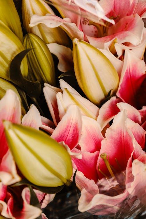 Kostnadsfri bild av blad, blombukett, blomma, blommor