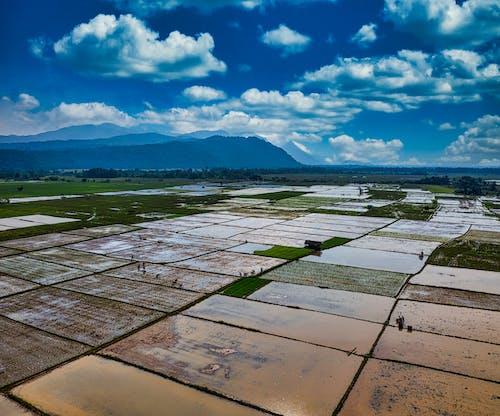 Fotos de stock gratuitas de aéreo, agricultura, agua, al aire libre