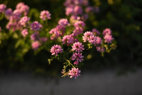 Flowers In Tilt Shift Lens