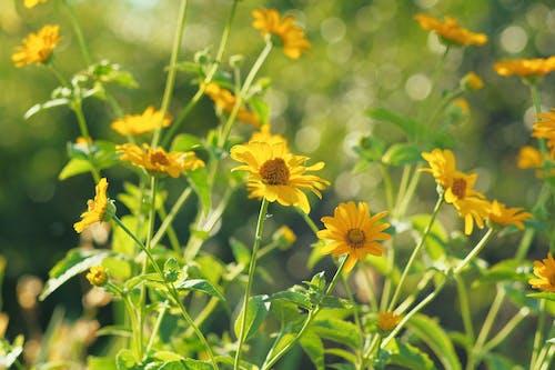 Free stock photo of flower, flower fields, garden