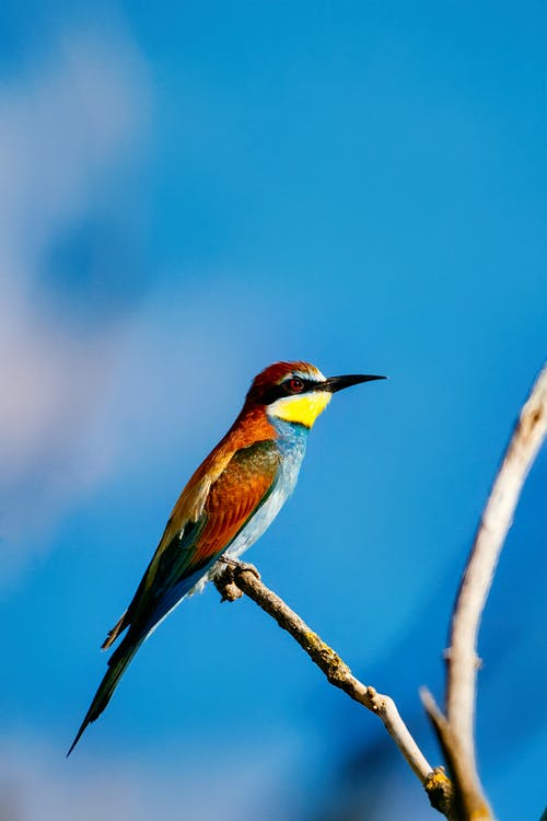 Green Yellow and Brown Bird on Brown Tree Branch