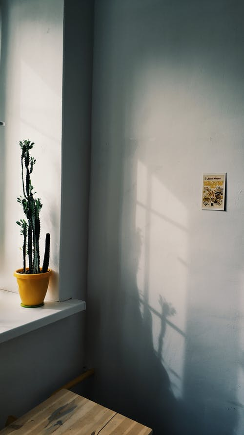 Minimalist interior of room with potted plant placed on windowsill at sunny day