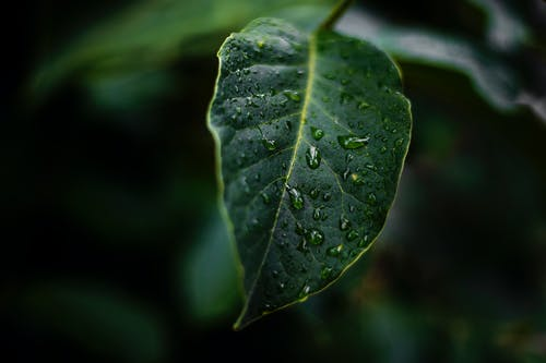 Free stock photo of green, leaf, mood, nature