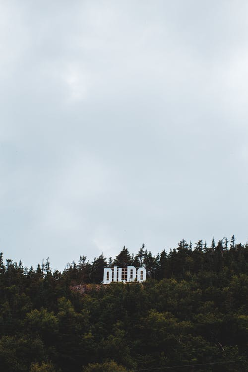 Banner in woods on cloudy day