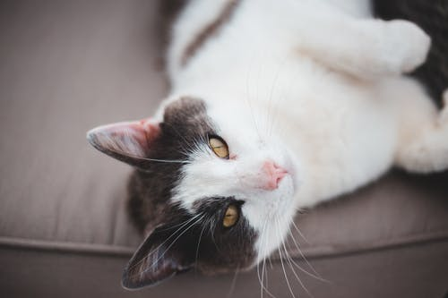 Cute cat lying on cozy sofa