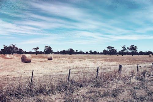 çalı, Çiftlik, çit, kuru içeren Ücretsiz stok fotoğraf
