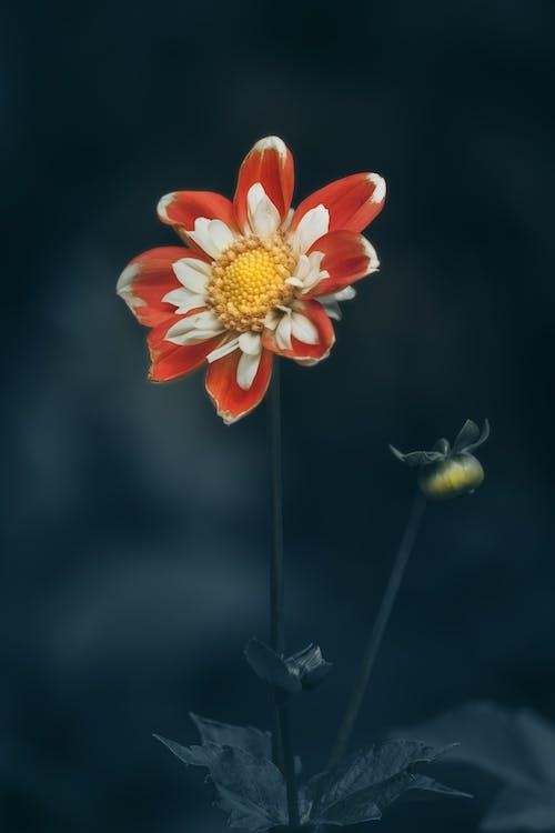 Kostenloses Stock Foto zu blühen, blumen wallpaper, blüte, blütenblätter