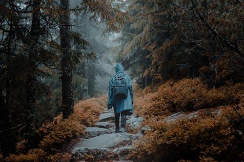 Immagine gratuita di alberi, boschi, camminando, foresta