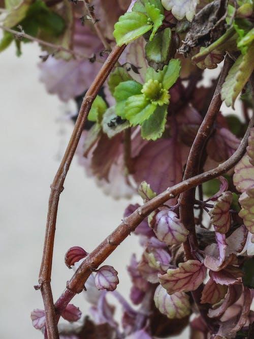 Ingyenes stockfotó arboles, entorno természetes, hojas témában