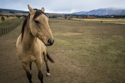 Free stock photo of horse