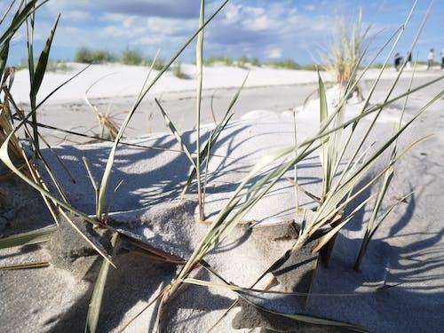 Free stock photo of beach, sand, straws